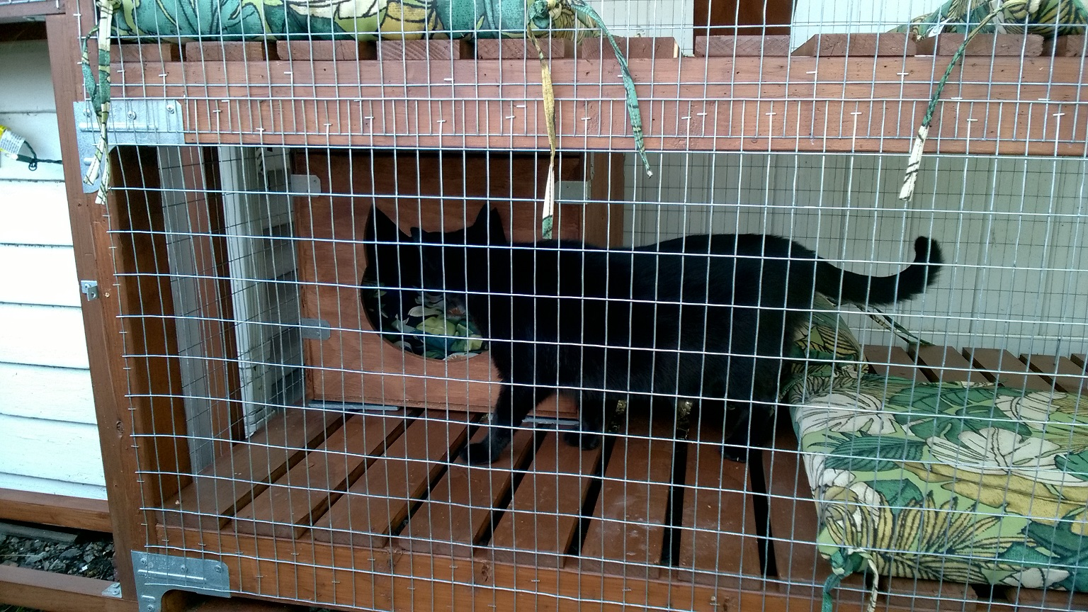 Backyard Catio – Part 24