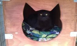 darwin sleeping in the catio sleeping box!