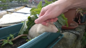 hubby patting franc in a back yard plant pot