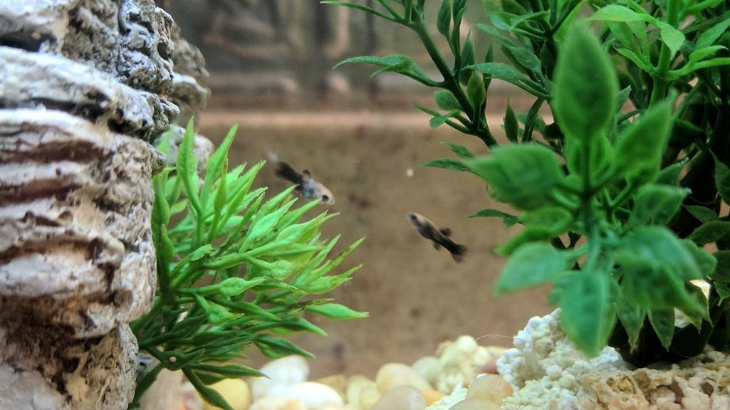 OMG Fish Babies!