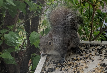 Outdoor Squirrel Feeding Platform