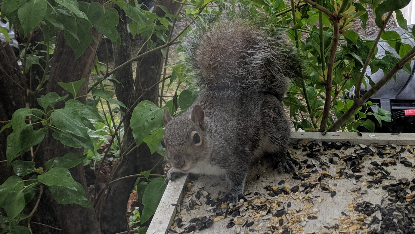 Outdoor Squirrel Feeding Platform