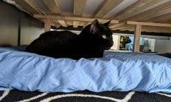 birdie on her memory foam cat bed under the new king bedframe