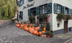 pumpkins outside a shop in ulm, germany