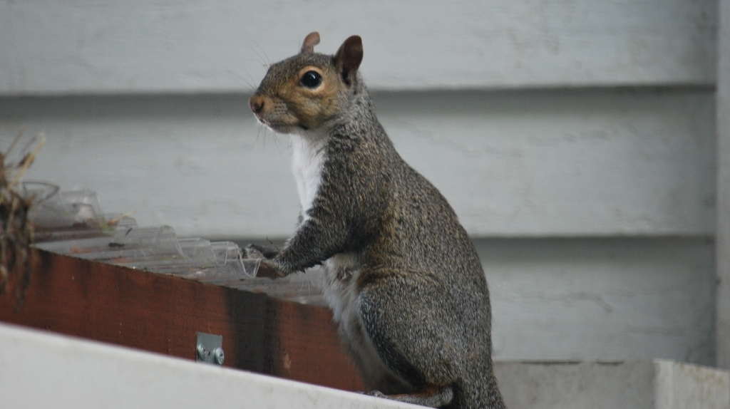 Squirrel Platform = FAIL