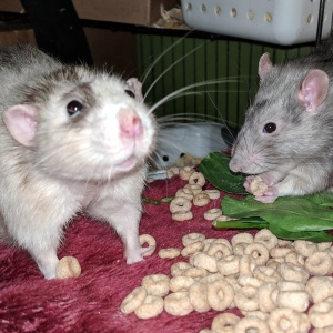 winston and killy eating cheerios