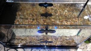 special suction cups to hold the fish tank divider in place