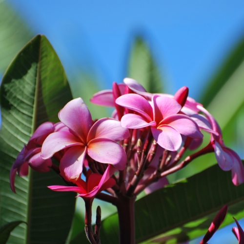 maui hawaii page header gallery photo